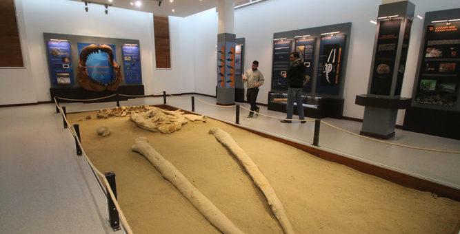 Una ballena de cinco millones de años